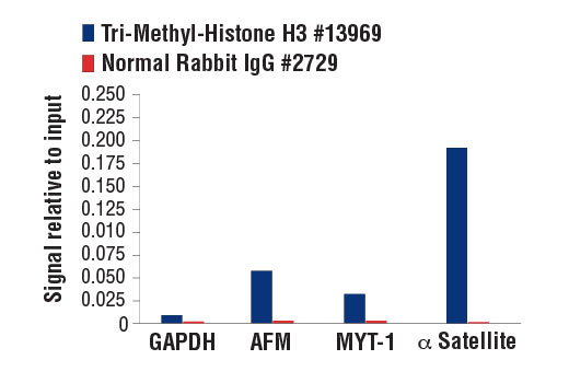 Chromatin Immunoprecipitation Image 1: Tri-Methyl-Histone H3 (Lys9) (D4W1U) Rabbit mAb