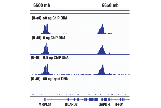 Chromatin Immunoprecipitation Image 1: SimpleChIP® ChIP-seq DNA Library Prep Kit for Illumina®