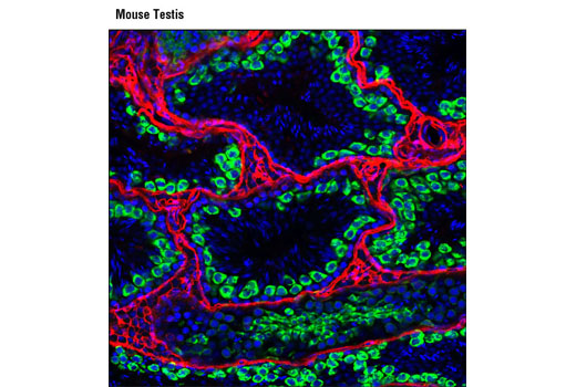 Image 10: RNAi Machinery Antibody Sampler Kit