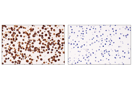 Image 28: Suppressive Myeloid Cell Phenotyping IHC Antibody Sampler Kit
