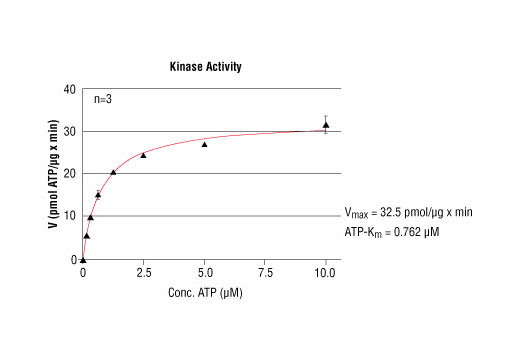 Image 5: HTScan® ABL1 Kinase Assay Kit