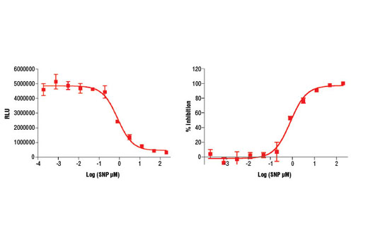 Image 2: Cyclic GMP XP® Chemiluminescent Assay Kit