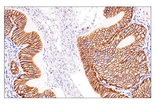 Image 70: Human Immune Cell Phenotyping IHC Antibody Sampler Kit