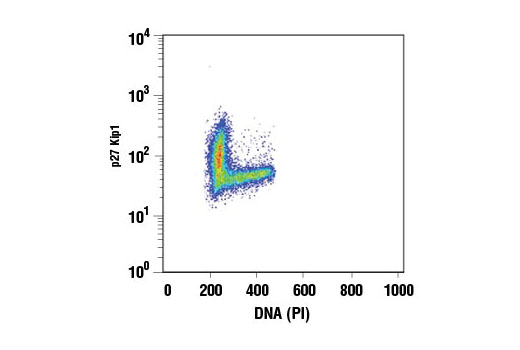 Flow Cytometry Image 1: p27 Kip1 (D69C12) XP® Rabbit mAb