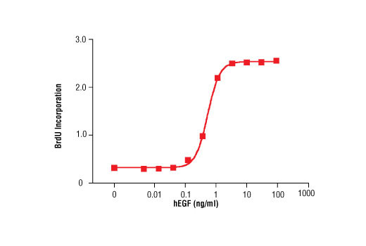 The proliferation of MCF10A cells treated with increasing concentrations of hEGF was assessed. After 24 hr treatment, cells were labeled with BrdU for 4 hr. BrdU incorporation was determined by ELISA and the OD450-OD690 was determined.