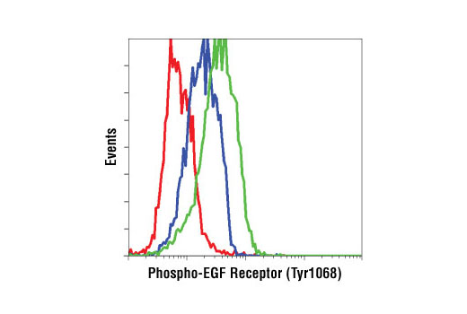 Flow cytometric analysis of A549 cells, untreated (blue) or EGF-treated (green), using Phospho-EGF Receptor (Tyr1068) (D7A5) XP<sup>®</sup> Rabbit mAb compared to concentration matched XP<sup>®</sup> Rabbit (DA1E) mAb IgG Isotype Control #3900 (red).