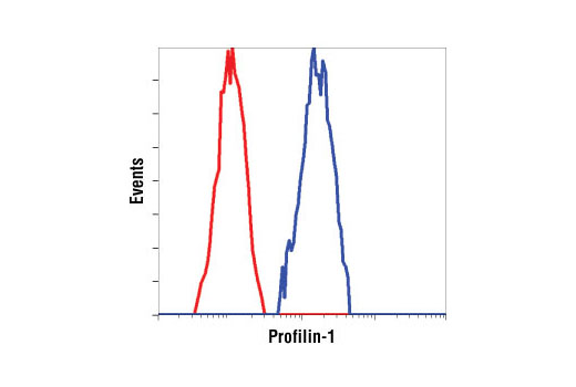 Flow cytometric analysis of HeLa cells, using Profilin-1 antibody (blue) compared to a nonspecific negative control antibody (red).