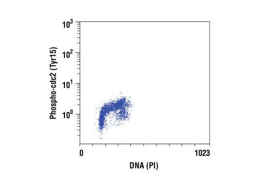 Flow cytometric analysis of Jurkat cells, using Phospho-cdc2 (Tyr15) (10A11) Rabbit mAb versus propidium iodide (DNA content).