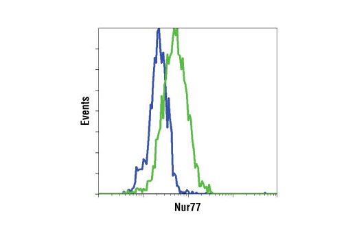 Flow cytometric analysis of Jurkat cells, untreated (blue) or treated with TPA #4174 and A23187 (green), using Nur77 (D63C5) XP<sup>®</sup> Rabbit mAb.