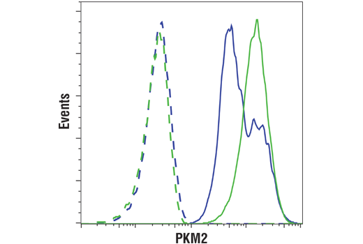 Flow cytometric analysis of 293T cells, transfected with PKM2 siRNA (blue) or mock transfected (green), using PKM2 (D78A4) XP® Rabbit mAb (solid lines) or a concentration-matched Rabbit (DA1E) mAb IgG XP® Isotype Control #3900 (dashed lines). Anti-rabbit IgG (H+L), F(ab')<sub>2</sub> Fragment (PE Conjugate) #8885 was used as a secondary antibody.