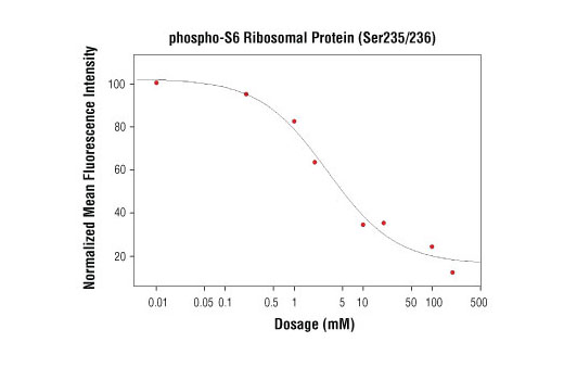 High content analysis of A549 cells exposed to varying concentrations of LY294002 #9901 for 3 hrs, followed by 100 ng/mL EGF for 20 minutes. With increasing concentrations of LY294002, a significant decrease (~5 fold) in phospho-S6 Ribosomal Protein (Ser235/236) signal as compared to the uninhibited control was observed. When using phospho-S6 as a measurement, the IC<sub>50</sub> of this compound was 3.06 μM. Data were generated on the Acumen HCS platform using Anti-Rabbit IgG (H+L), F(ab')<sub>2</sub> Fragment (Alexa Fluor<sup>®</sup> 555 Conjugate).