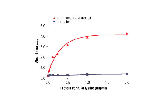 Figure 2. The relationship between protein concentration of untreated or goat anti-human IgM treated Ramos cell lysates and the absorbance at 450 nm is shown. Cells were serum starved overnight and then treated with goat anti-human IgM (10 μg/ml) for 10 min. at 37ºC.