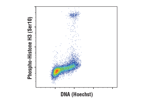 Flow cytometric analysis of Jurkat cells using Phospho-Histone H3 (Ser10) (D7N8E) XP® Rabbit mAb #53348 and Hoechst 33342 (DNA content). Anti-rabbit IgG (H+L), F(ab')2 Fragment (Alexa Fluor® 488 Conjugate) #4412 was used as a secondary antibody.