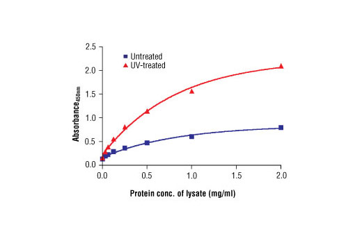 Figure 2. The relationship between the protein concentration of lysates from untreated and UV-treated HeLa cells and the absorbance at 450 nm using the PathScan<sup>®</sup> Phospho-Chk2 (Thr68) Sandwich ELISA Kit #7037 is shown.