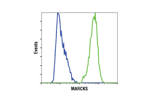 Flow cytometric analysis of Jurkat (blue) and HeLa (green) cells using MARCKS (D88D11) XP<sup>®</sup> Rabbit mAb.