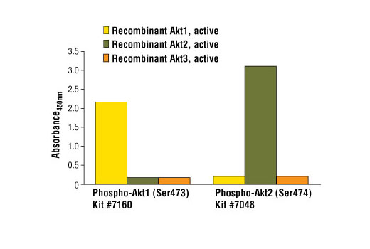 Figure 2: Demonstration of phospho-Akt2 (Ser474) sandwich ELISA kit specificity using recombinant phosphorylated Akt1, Akt2 and Akt3 proteins. Phospho-Akt1 (Ser473) is detected by PathScan<sup>®</sup> Phospho-Akt1 (Ser473) Sandwich ELISA Kit #7160 while PathScan<sup>®</sup> Phospho-Akt2 (Ser474) Sandwich ELISA Kit #7048 measures levels of phospho-Akt2 (Ser474). Recombinant phosphorylated Akt protein (1.0 ng per microwell) is assayed using both ELISA kits.