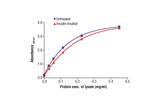 Figure 3: The relationship between protein concentration of lysates from untreated and insulin-treated A-673 cells and the absorbance at 450 nm is shown. After starvation, A-673 cells (75% confluence) were treated with insulin (100 nM) for 10-20 min at 37ºC and then lysed.