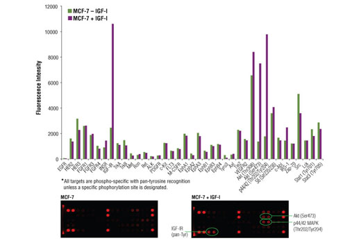 Image 2: PathScan® RTK Signaling Antibody Array Kit (Fluorescent Readout)