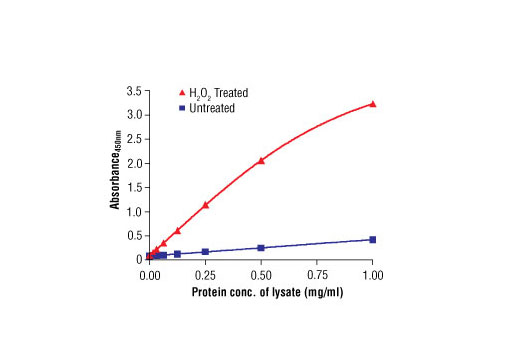 Figure 2. The relationship between lysate protein concentration from untreated and H<sub>2</sub>0<sub>2</sub>-treated MDCK cells and the absorbance at 450 nm is shown. MDCK cells were treated with H<sub>2</sub>0<sub>2</sub> (3 mM) for 3 minutes at 37ºC and then lysed.