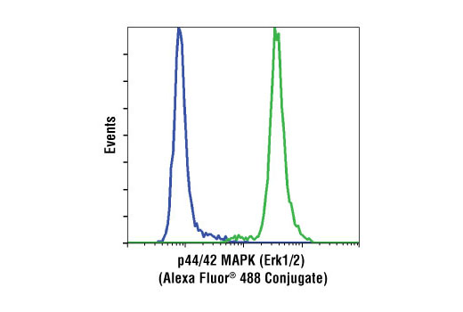 Flow cytometric analysis of Jurkat cells, using p44/42 MAPK (Erk1/2) (137F5) Rabbit mAb (Alexa Fluor<sup>®</sup> 488 Conjugate) (green) compared to XP<sup>®</sup> Rabbit (DA1E) mAb IgG Isotype Control (Alexa Fluor<sup>®</sup> 488 Conjugate) #2975 (blue).