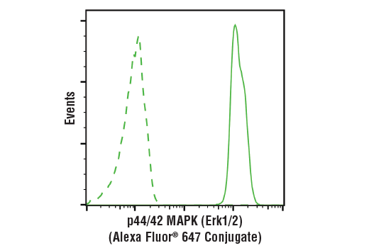 Flow cytometric analysis of Jurkat cells using p44/42 MAPK (Erk1/2) (137F5) Rabbit mAb (Alexa Fluor<sup>®</sup> 647 Conjugate) (solid line) compared to concentration-matched Rabbit (DA1E) mAb IgG XP<sup>®</sup> Isotype Control (Alexa Fluor<sup>®</sup> 647 Conjugate) #2985 (dashed line).