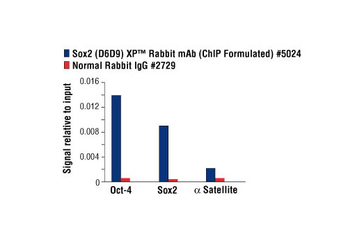 Chromatin immunoprecipitations were performed with cross-linked chromatin from NCCIT cells and either Sox2 (D6D9) XP<sup>®</sup> Rabbit mAb (ChIP Formulated) or Normal Rabbit IgG #2729 using SimpleChIP<sup>®</sup> Enzymatic Chromatin IP Kit (Magnetic Beads) #9003. The enriched DNA was quantified by real-time PCR using SimpleChIP<sup>®</sup> Human Oct-4 Promoter Primers #4641, SimpleChIP<sup>®</sup> Human Sox2 Promoter Primers #4649, and SimpleChIP<sup>®</sup> Human α Satellite Repeat Primers #4486. The amount of immunoprecipitated DNA in each sample is represented as signal relative to the total amount of input chromatin, which is equivalent to one.