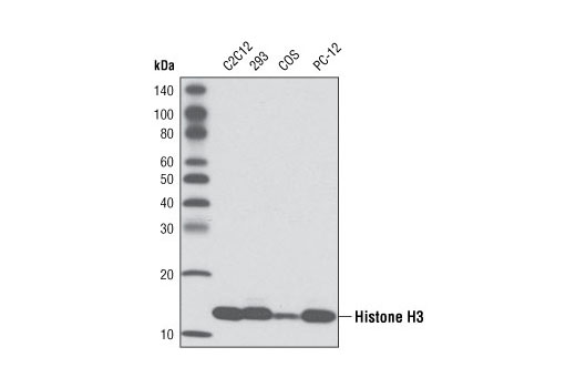 Dog Histone Methylation