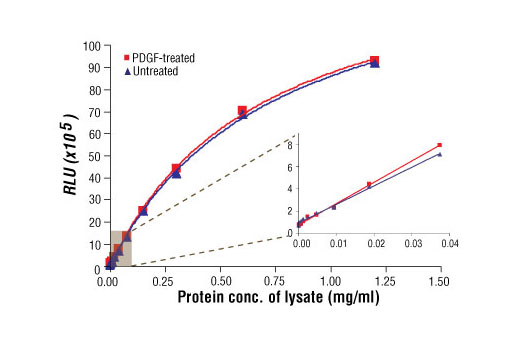 Relationship between protein concentrations of lysates prepared using NCI-H2228 cells lysed with (phospho) and without (nonphospho) the addition of phosphatase inhibitors to the lysis buffer. Graph inset corresponding to the shaded area shows high sensitivity and a linear response at the low protein concentration range.