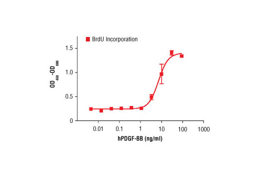 The proliferation of NIH/3T3 cells treated with increasing concentrations of hPDGF-BB basic was assessed. After 24 hr treatment, cells were labeled with BrdU for 4 hrs. BrdU incorporation was determined by ELISA and the OD<sub>450</sub>-OD<sub>690</sub> was determined.