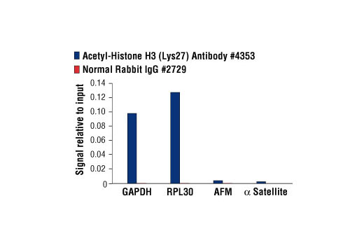 Chromatin immunoprecipitations were performed with cross-linked chromatin from HeLa cells and either Acetyl-Histone H3 (Lys27) Antibody or Normal Rabbit IgG #2729 using SimpleChIP<sup>®</sup> Enzymatic Chromatin IP Kit (Magnetic Beads) #9003. The enriched DNA was quantified by real-time PCR using SimpleChIP<sup>®</sup> Human GAPDH Exon 1 Primers #5516, SimpleChIP<sup>®</sup> Human RPL30 Exon 3 Primers #7014, SimpleChIP<sup>®</sup> Human AFM Intron 1 Primers #5098, and SimpleChIP<sup>®</sup> Human α Satellite Repeat Primers #4486. The amount of immunoprecipitated DNA in each sample is represented as signal relative to the total amount of input chromatin, which is equivalent to one.