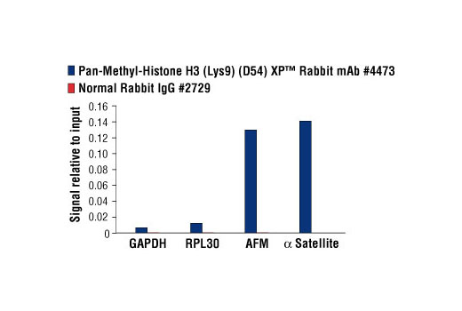 Chromatin immunoprecipitations were performed with cross-linked chromatin from HeLa cells and either Pan-Methyl-Histone H3 (Lys9) (D54) XP<sup>®</sup> Rabbit mAb or Normal Rabbit IgG #2729, using SimpleChIP<sup>®</sup> Enzymatic Chromatin IP Kit (Magnetic Beads) #9003. The enriched DNA was quantified by real-time PCR using SimpleChIP<sup>®</sup> Human GAPDH Exon 1 Primers #5516, SimpleChIP<sup>®</sup> Human RPL30 Exon 3 Primers #7014, SimpleChIP<sup>®</sup> Human AFM Intron 1 Primers #5098, and SimpleChIP<sup>®</sup> Human α Satellite Repeat Primers #4486. The amount of immunoprecipitated DNA in each sample is represented as signal relative to the total amount of input chromatin, which is equivalent to one.