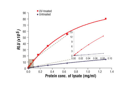 Relationship between protein concentration of lysates from untreated and UV-treated 293 cells and immediate light generation with chemiluminescent substrate is shown. 293 cells (70-90% confluence) were treated with or without UV and lysed after incubation at 37ºC for 30 minutes. The graph inset corresponding to the shaded area shows high sensitivity and a linear response at the low protein concentration range.