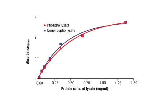 Figure 2: The relationship between protein concentration of phospho or nonphospho lysates and the absorbance at 450 nm is shown. HCC78 cells were cultured (85% confluence) and lysed with or without the addition of phosphatase inhibitor to the lysis buffer (phospho or nonphospho lysate, respectively).