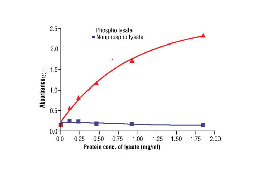 Figure 2: The relationship between protein concentration of phospho or nonphospho lysates and the absorbance at 450 nm is shown. TT cells were cultured (85% confluence) and lysed with or without the addition of phosphatase inhibitor to the lysis buffer (phospho or nonphospho lysate).