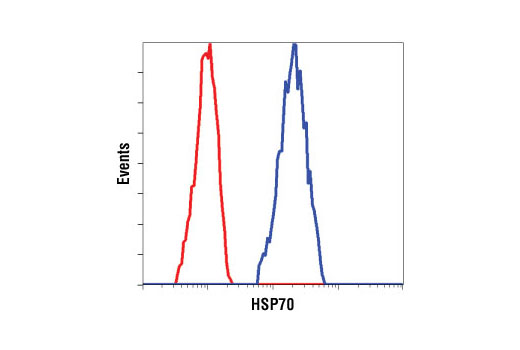 Monoclonal Antibody - HSP70 (6B3) Rat mAb, UniProt ID P0DMV8, Entrez ID 3303 #4873 - Protein Folding and Trafficking