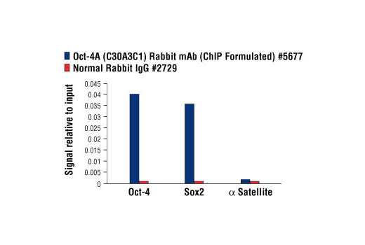 Chromatin immunoprecipitations were performed with cross-linked chromatin from NCCIT cells and either Oct-4A (C30A3C1) Rabbit mAb (ChIP Formulated) or Normal Rabbit IgG #2729 using SimpleChIP<sup>®</sup> Enzymatic Chromatin IP Kit (Magnetic Beads) #9003. The enriched DNA was quantified by real-time PCR using SimpleChIP<sup>®</sup> Human Oct-4 Promoter Primers #4641, SimpleChIP<sup>®</sup> Human Sox2 Promoter Primers #4649, and SimpleChIP<sup>®</sup> Human α Satellite Repeat Primers #4486. The amount of immunoprecipitated DNA in each sample is represented as signal relative to the total amount of input chromatin, which is equivalent to one.