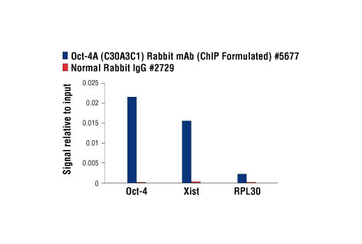 Chromatin immunoprecipitations were performed with cross-linked chromatin from mES cells and either Oct-4A (C30A3C1) Rabbit mAb (ChIP Formulated) or Normal Rabbit IgG #2729 using SimpleChIP<sup>®</sup> Enzymatic Chromatin IP Kit (Magnetic Beads) #9003. The enriched DNA was quantified by real-time PCR using SimpleChIP<sup>®</sup> Mouse Oct-4 Promoter Primers #4653, SimpleChIP<sup>®</sup> Mouse XIST Intron 1 Primers #4659, and SimpleChIP<sup>®</sup> Mouse RPL30 Intron 2 Primers #7015. The amount of immunoprecipitated DNA in each sample is represented as signal relative to the total amount of input chromatin, which is equivalent to one.