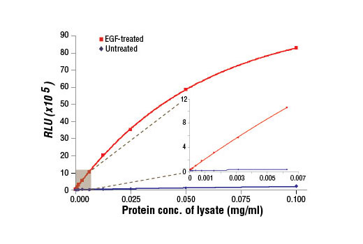 Figure 1. The relationship between protein concentration of lysates from A-431 cells, untreated or treated with hEGF #8916, and immediate light generation with chemiluminescent substrate. After starvation, A-431 cells (85% confluence) were treated with EGF (100 ng/ml, 5 min at 37°C) and then lysed. Graph inset corresponding to the shaded area shows high sensitivity and a linear response at the low protein concentration range.