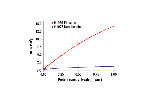 Figure 2. The relationship between protein concentration of lysates prepared using H1975 cells, lysed with (phospho) and without (nonphospho) the addition of phosphatase inhibitors to the lysis buffer, and immediate light generation using chemiluminescent substrate.
