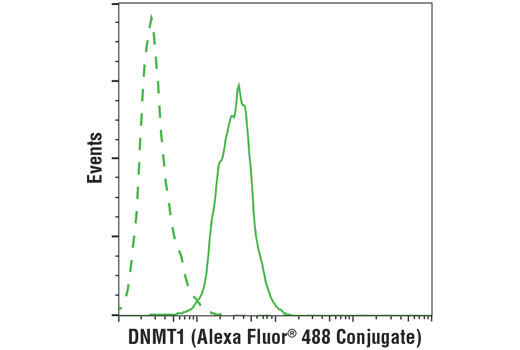 Flow cytometric analysis of COS7 cells using DNMT1 (D63A6) XP® Rabbit mAb (solid line) compared to concentration-matched Rabbit (DA1E) mAb IgG XP® Isotype Control #3900 (dashed line). Anti-rabbit IgG (H+L) F(ab')<sub>2 </sub>Fragment (Alexa Fluor® 488 Conjugate) #4412 was used as a secondary antibody.