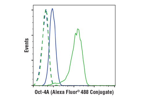 Flow cytometric analysis of Hela cells (blue) and NTERA-2 cells (green) using Oct-4A (C30A3) Rabbit mAb (Alexa Fluor® 488 Conjugate) (solid lines) or a concentration-matched Rabbit (DA1E) mAb IgG XP<sup>®</sup> Isotype Control (Alexa Fluor<sup>®</sup> 488 Conjugate) #2975 (dashed lines).