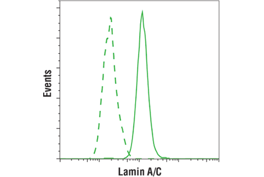Flow cytometric analysis of HeLa cells (green) using Lamin A/C (4C11) Mouse mAb (solid lines) or a concentration matched Mouse (G3A1) mAb IgG Isotype Control #5415 (dashed lines). Anti-mouse IgG (H+L), F(ab')<sub>2</sub> Fragment (Alexa Fluor<sup>®</sup> 488 Conjugate) #4408 was used as a secondary antibody.