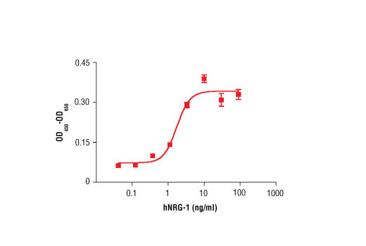 The proliferation of MCF7 cells treated with increasing concentrations of hNRG-1 was assessed. After a 7 day treatment with hNRG-1 cells were incubated with a tetrazolium salt and the OD<sub>450 </sub>- OD<sub>650 </sub>was determined.