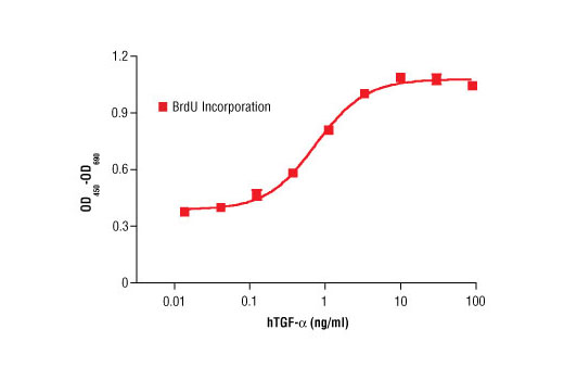 Image 1: Human Transforming Growth Factor α (hTGF-α)