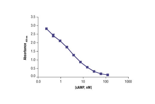 Image 3: Cyclic AMP XP® Assay Kit