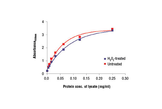 Figure 2. The relationship between the protein concentration of lysates from untreated and H<sub>2</sub>O<sub>2</sub>-treated Hep G2 cells and the absorbance at 450 nm using the PathScan<sup>®</sup> Total ACC Sandwich ELISA Kit #7996 is shown.