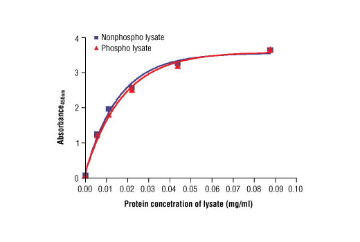 Figure 2: The relationship between protein concentration of phospho or nonphospho lysates and the absorbance at 450 nm is shown. Calu-3 cells were cultured (85% confluence) and lysed with or without the addition of phosphatase inhibitor to the lysis buffer (phospho or nonphospho lysate).