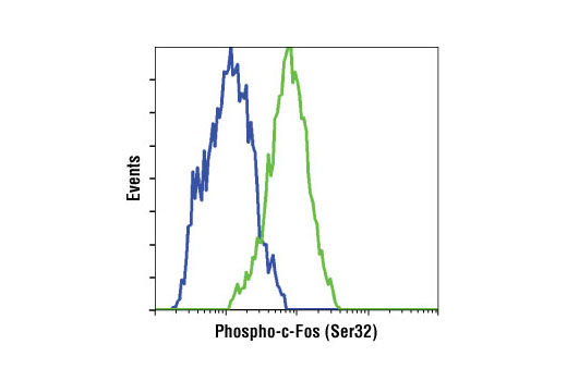 Flow Cytometry Image 1: Phospho-c-Fos (Ser32) (D82C12) XP® Rabbit mAb