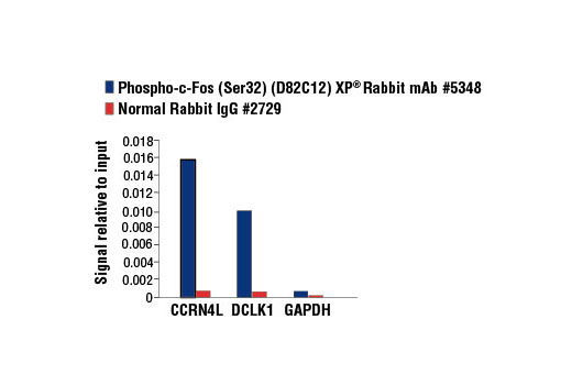 Chromatin Immunoprecipitation Image 2: Phospho-c-Fos (Ser32) (D82C12) XP® Rabbit mAb