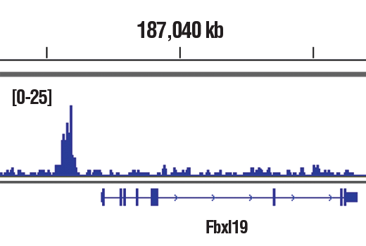 Chromatin immunoprecipitations were performed with cross-linked chromatin from PC-12 cells starved overnight and treated with Human β-Nerve Gowth Factor (hβ-NGF) #5221 (50ng/ml) for 2h and Phospho-c-Fos (Ser32) (D82C12) XP<sup>®</sup> Rabbit mAb, using SimpleChIP<sup>®</sup> Plus Enzymatic Chromatin IP Kit (Magnetic Beads) #9005. DNA Libraries were prepared using SimpleChIP<sup>®</sup> ChIP-seq DNA Library Prep Kit for Illumina<sup>®</sup> #56795. The figure shows binding across Fbxl19 gene. For additional ChIP-seq tracks, please download the product data sheet.